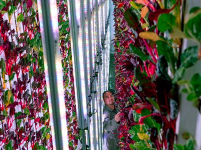 Роботы удешевляют продукцию на вертикальной ферме, в которую инвестировал глава Amazon