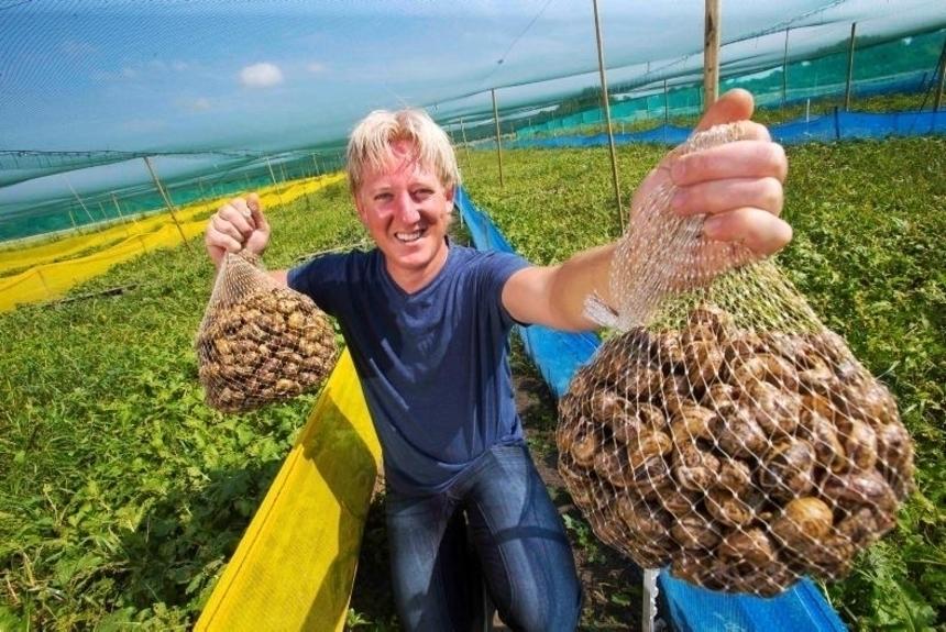 """Фото: <a href="""" https://www.farmersjournal.ie/growing-interest-in-high-profit-snail-farming-237242 """"target=""""_blank"""" rel=""""nofollow"""">farmersjournal.ie </a>"""