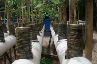 Система Sabi или как семья может производить 190 кг пищи за шесть месяцев