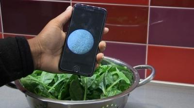 Смартфон научили находить бактерии на овощах и фруктах