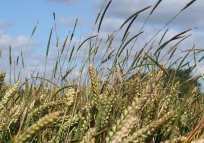 Сорняки выходят из-под контроля, адаптируясь к гербицидам — исследование