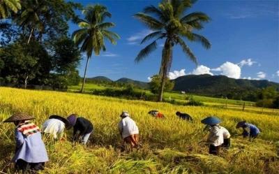 Советы из Таиланда для органической фермы (ВИДЕО)