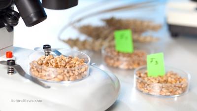 США не собирается регулировать все ГМО подряд. Есть нюансы