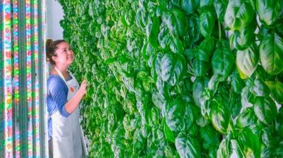 Стартап Plenty — вертикальная ферма нового поколения