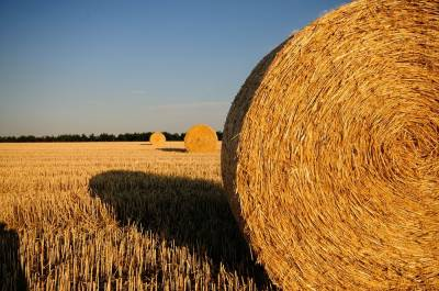 Каким бывает мошенничество в агробизнесе и как ему противостоять