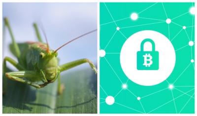 Сверчки и Blockchain победили на азиатском конкурсе agtech-стартапов