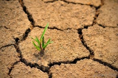 Учёные нашли гормон, который сужает поры растений при засухе