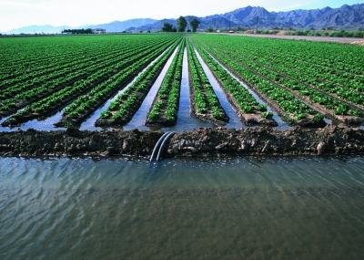 Учёные помогут аграриям Калифорнии эффективнее использовать воду