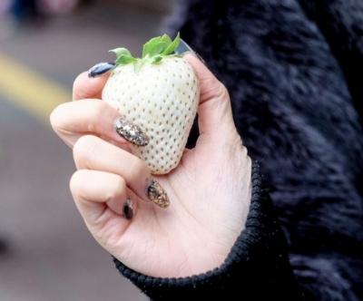В Японии выращивают белую клубнику по $10 за штуку (ВИДЕО)
