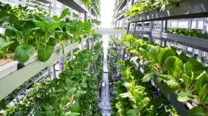 Вечернее чтиво: Есть ли будущее у вертикальных ферм в Украине