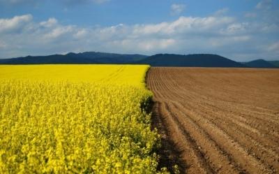 Вечернее чтиво: Почему забуксовала земельная реформа в Украине