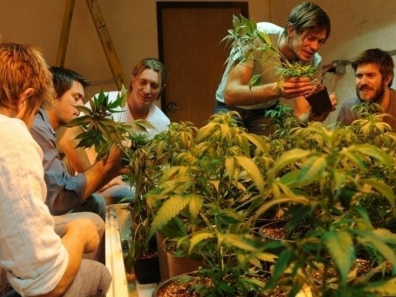 Фильм о том как 2 друга выращивали коноплю марихуана и организм