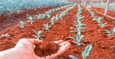 """""""Висячие сады Марса"""": ученые исследуют возможности красной планеты"""