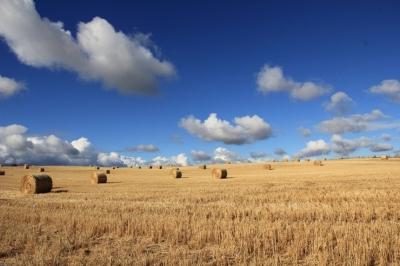 Всемирная сельскохозяйственная перепись FAO