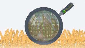 Жажда данных: для чего агросектору нужны Big Data