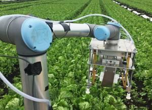 Робот-комбайн Vegebot пройшов успішне випробування в полі