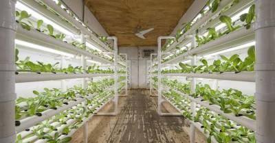 На гидропонной ферме проекта Ford Mobile Farm выращивают овощи для бездомных