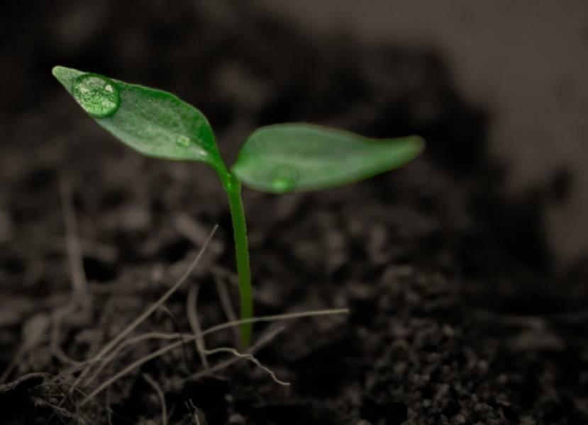 Продукты из рисовой шелухи для удержания почвенной влаги