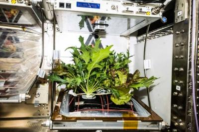 Китай открывает первый в мире центр космической селекции семян