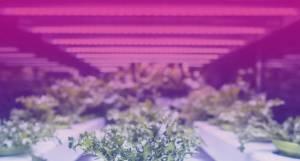 Світлодіодне освітлення — технологія, що дозволяє заощадити електроенергію та підвищити врожайність у теплицях