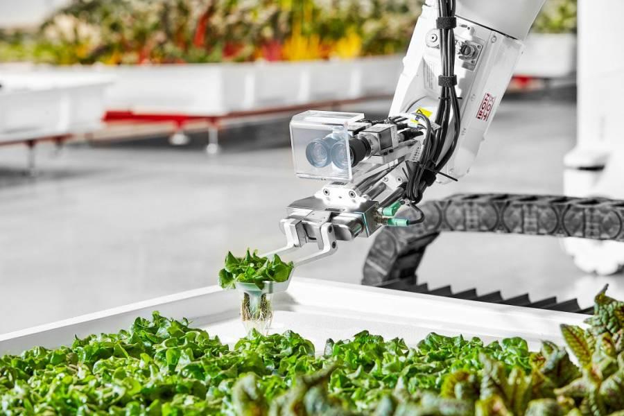 Роботизированная гидропонная ферма будет выращивать овощи без человеческого вмешательства?