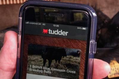 У Великобританії створили аналог Tinder для пошуку корів