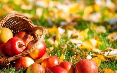 Яблоня: болезни, вредители и способы борьбы с ними