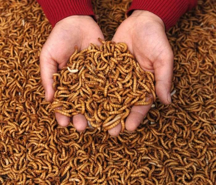 Стартап з вирощування комах отримав $125 млн інвестицій
