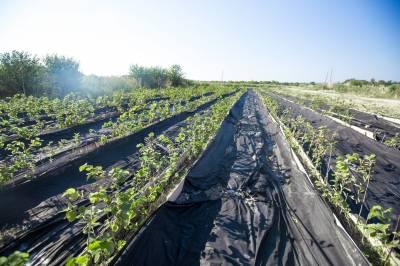 Вирощування горіхів як бізнес в Україні