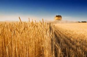 Компания из США работает над новыми сортами пшеницы, сои и кукурузы, которые повысят продуктивность агробизнеса