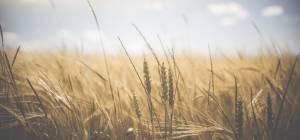 Як переконати аграрія в необхідності впровадження інновацій?