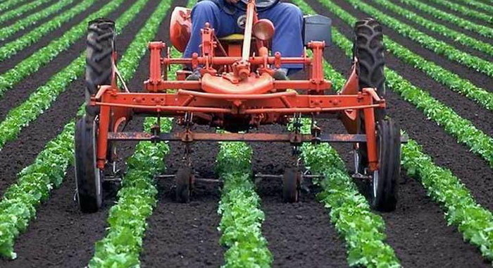 salat yield