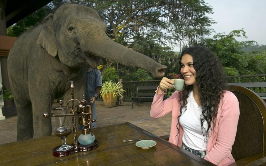 Слоново-кофейная ферма