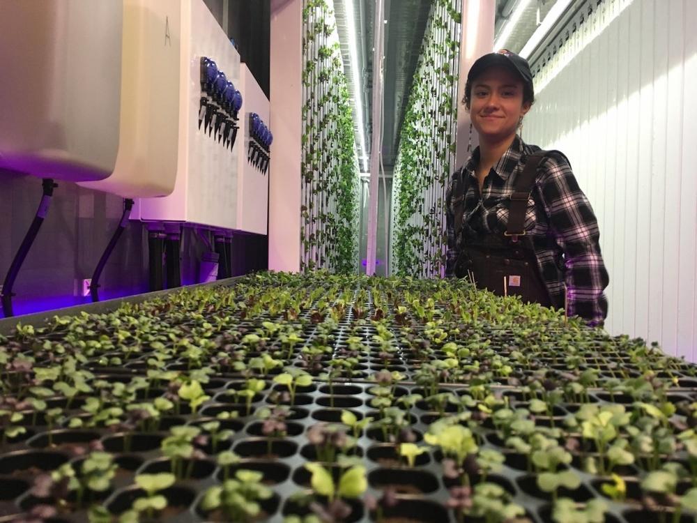 Выращивание специй