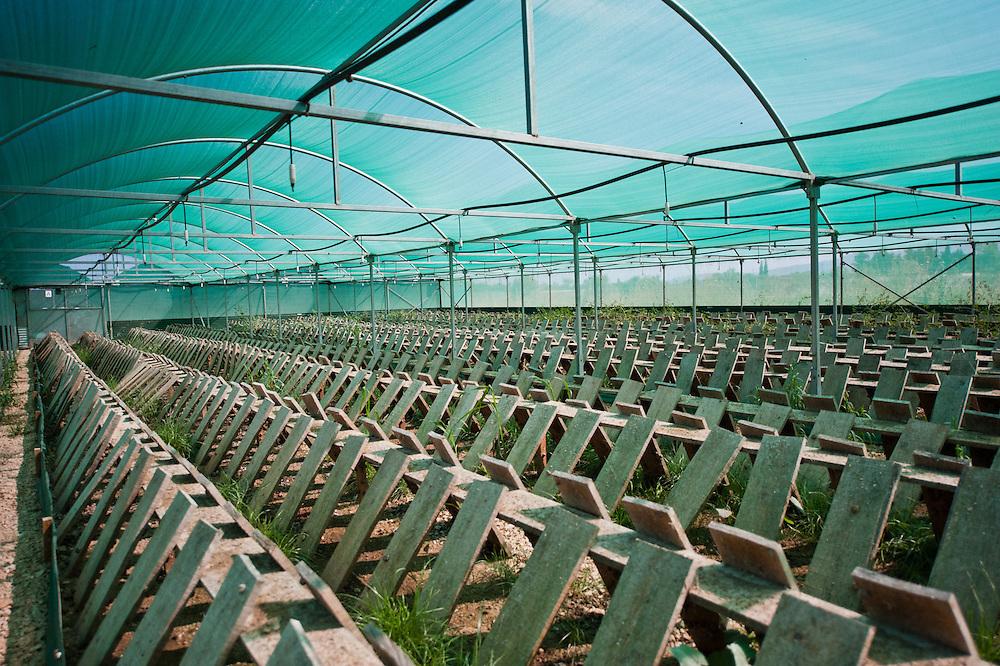 Бизнес выращивание виноградной улитки 21