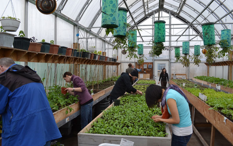 greenhouse in Northern Canada
