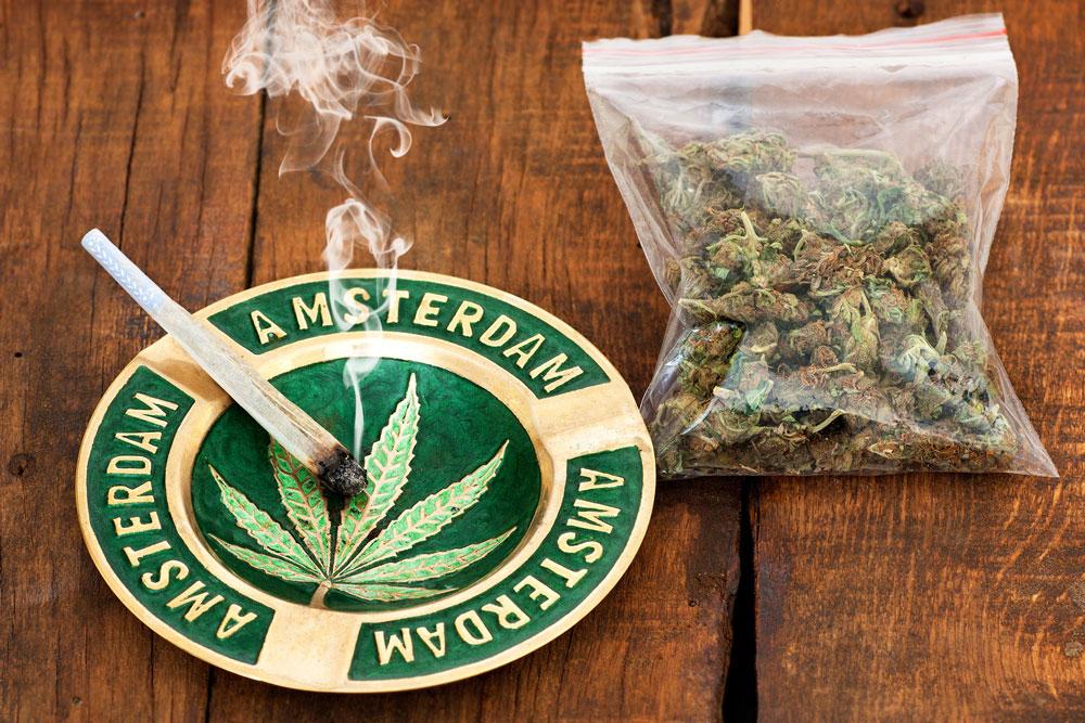 В голландии легализовали марихуану марихуана и канапля