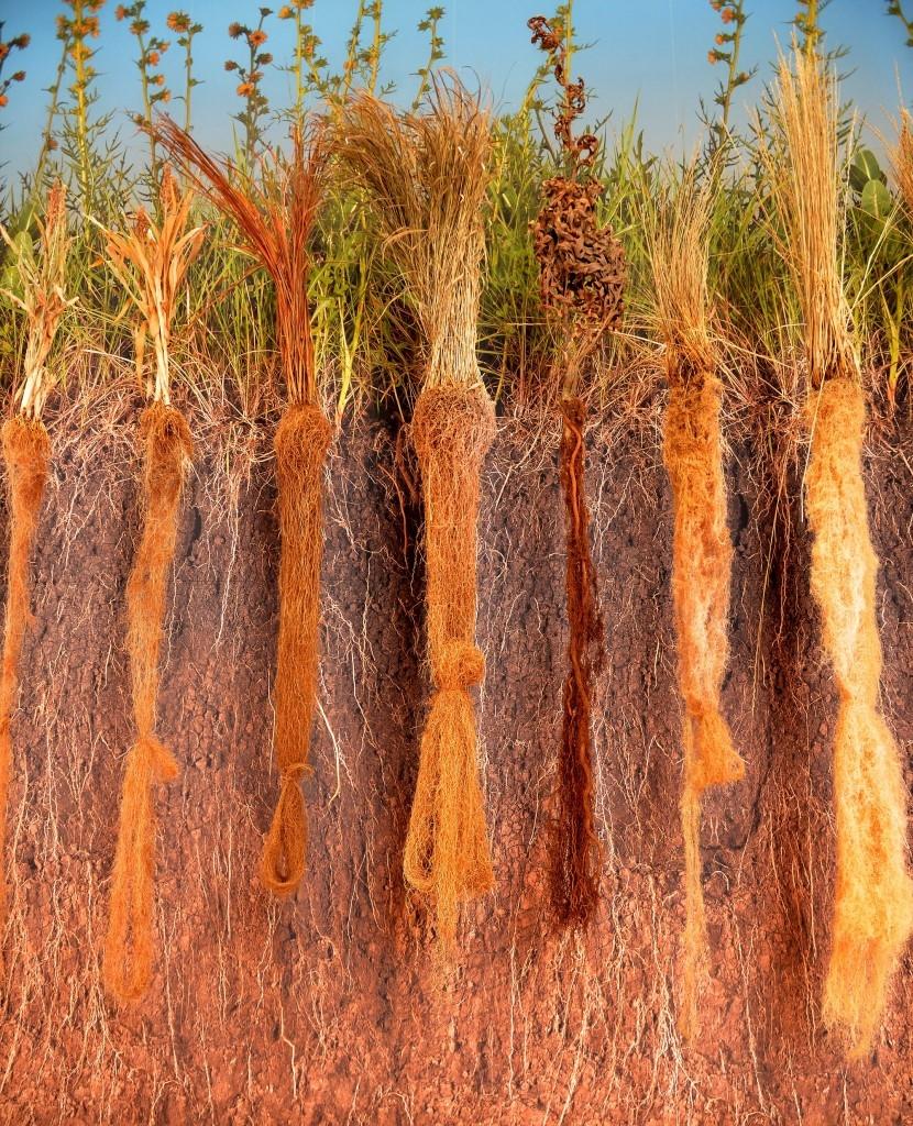 Воспринять травяную экосистему сложно
