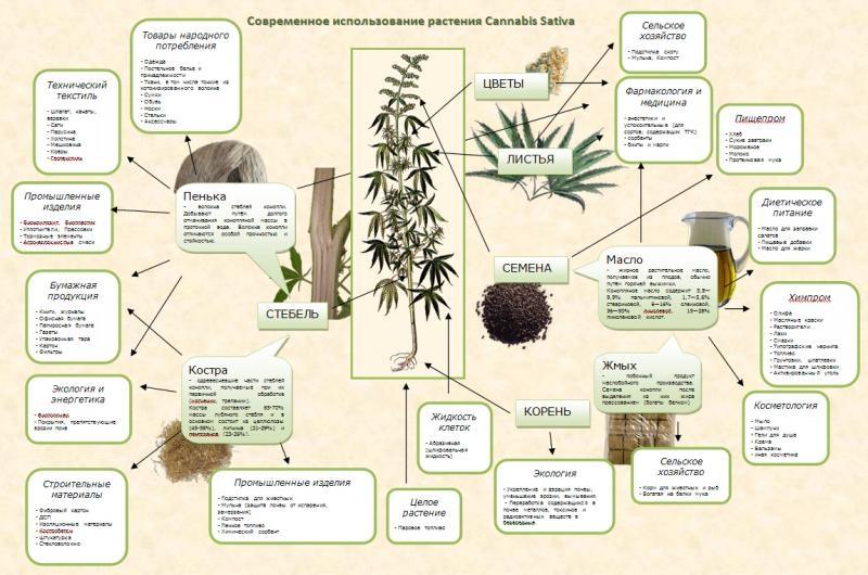 Что сделать с коноплей последствия передозировки марихуаны
